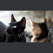 """Abzug Fotografie """"Strandkatzen"""""""